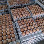 Fakta, Khasiat dan Kebaikan Telur Ayam